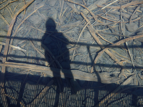 Shadowy Selfie on the Driftwood Under the Clear Water