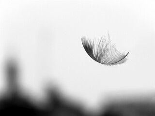 a feather | by Dr. Partha Sarathi Sahana