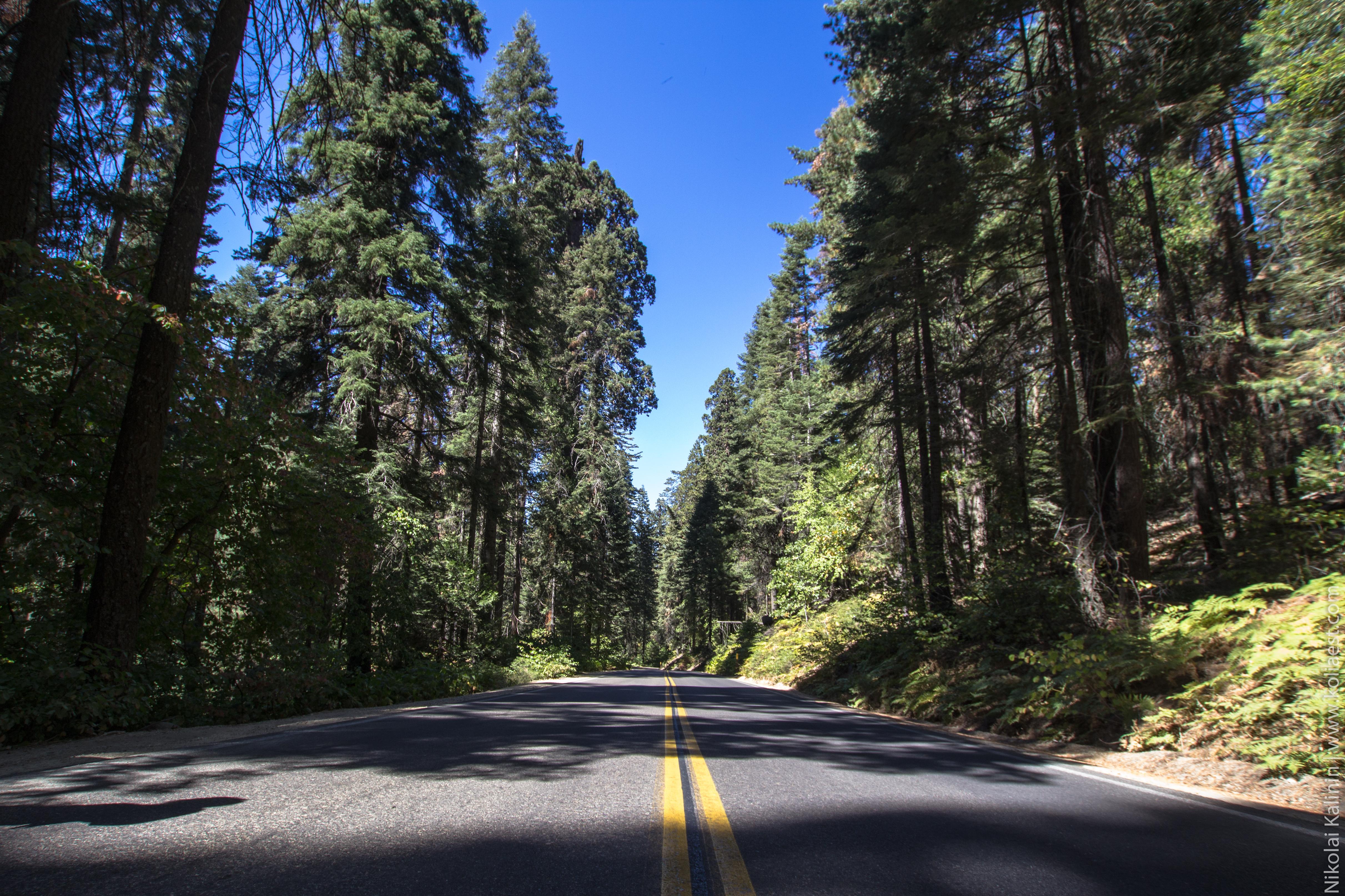Sequoia-72