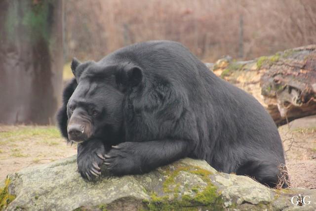 Besuch Zoo Berlin 26.02.201731