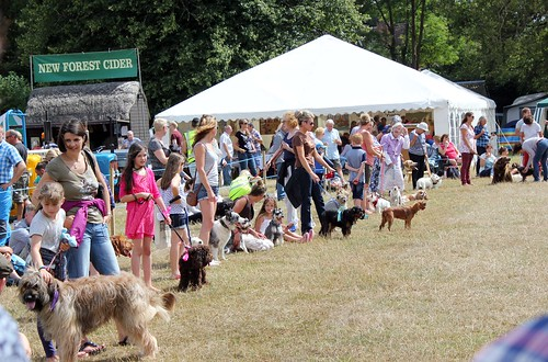 The Burley Dog Show | by Frankie is Swell