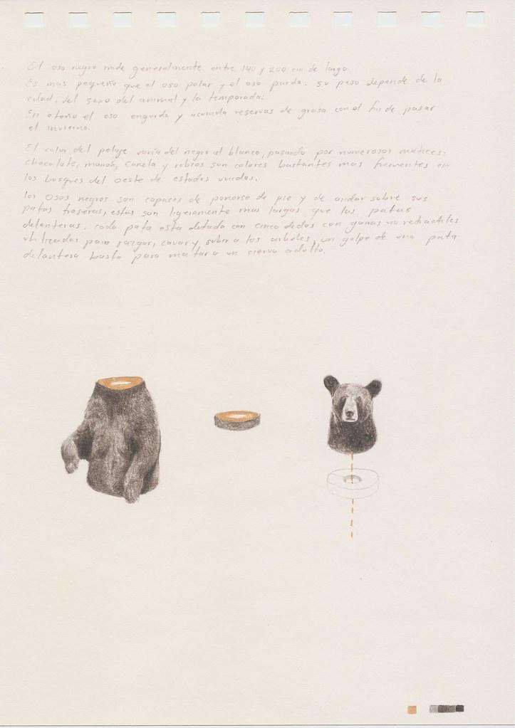 Anatomía de un oso negro   lápiz y acuarela sobre papel. 15 …   Flickr