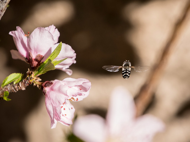 insect visiting flowers