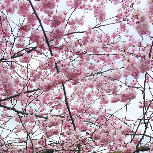 In case you can't get enough of spring, let me add another shot of pink blossoms to Instagram. 🌸💕 #springblooms | by NoApathyAllowed