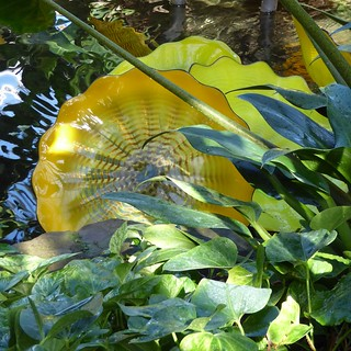 Chicago, Garfield Park Conservatory, Glass Flowers and Foliage (Sculptor: Dale Chihuly)