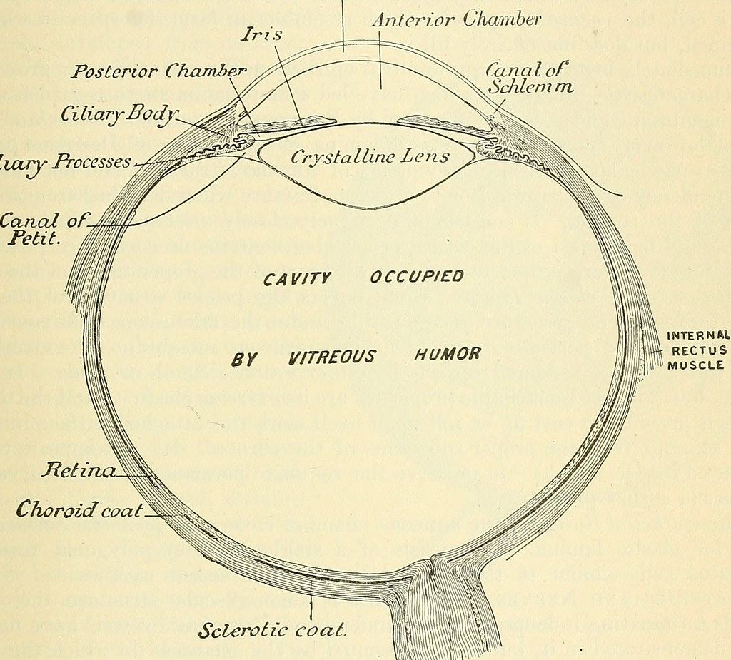 Image From Page 812 Of Anatomy Descriptive And Surgical Flickr