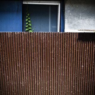 One Vine Strong with Corrugated Metal, Kita Senju, Tokyo | by jacob schere [in the 03 strategically planning]