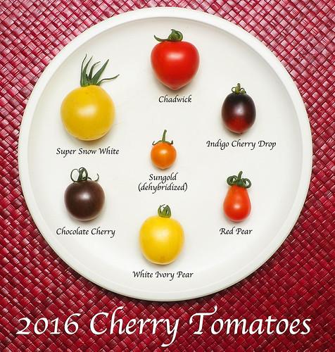 2016 Cherry Tomatoes