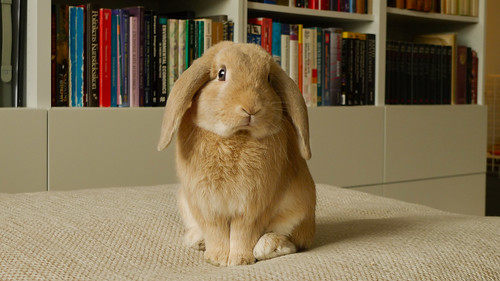 Cute Bunny Rabbit Picture Of My Friends Rabbit His Name