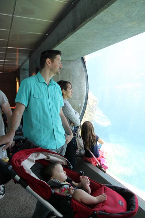 060516_aquarium14