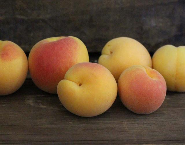 blenheim-apricots
