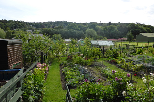 Moncreiffe Island: allotments | by yellow book