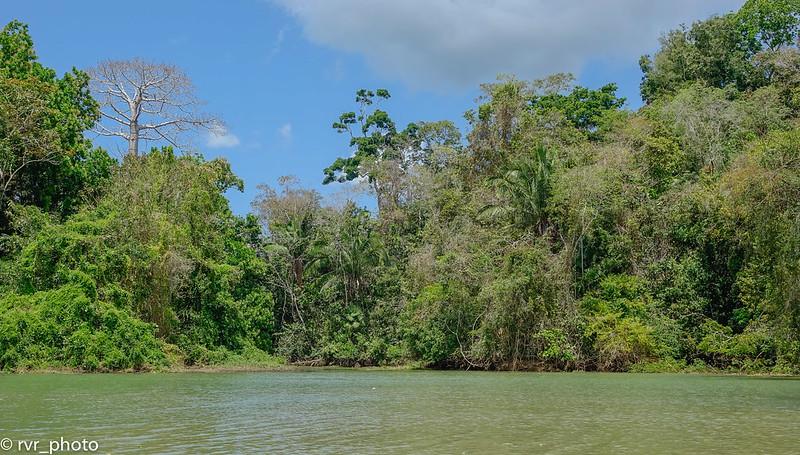 Isla de los Monos en lago Gatún, Gamboa, Panamá