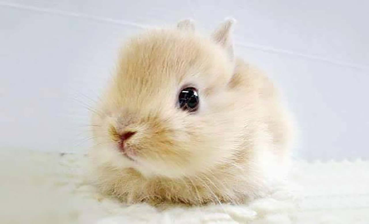27 Adorable & Tiny Animals That Are Too Cute To Handle #20: Rabbit