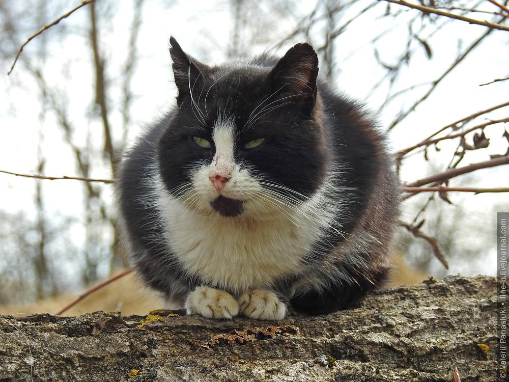 20170311_velemche_cat_001