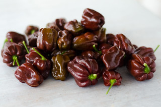 Chocolate Habanero Pepper | by hepp