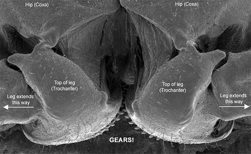 Planthopper_gears