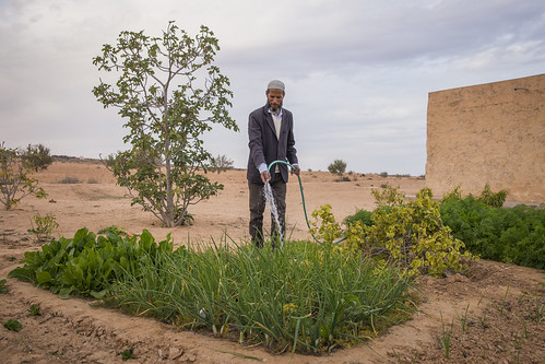 Family farming - Tunisia | by Dryland Systems
