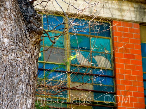 Cracked Beauty Window | by Bonnie Feaster Chapa Photographic Art