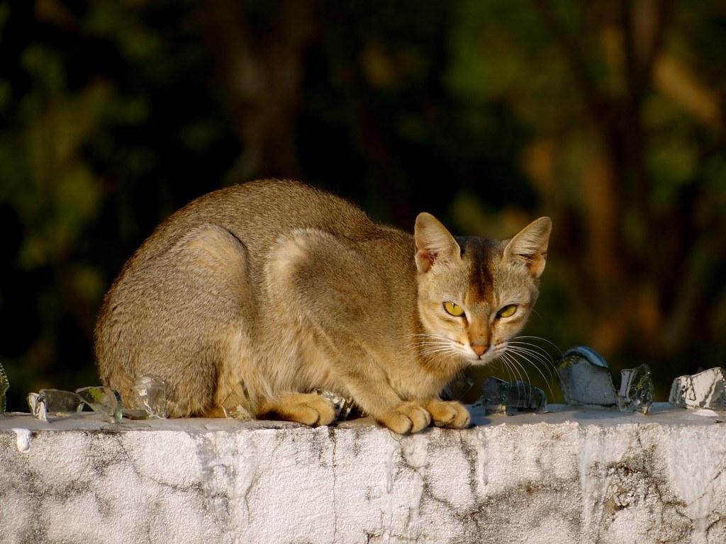 Soft Kitty Warm Kitty Little Ball Of Fur Richa Yadav Flickr