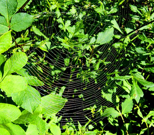 Spider Web in Green | by Stanley Zimny (Thank You for 32 Million views)
