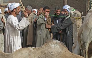 CamelMarket1-12