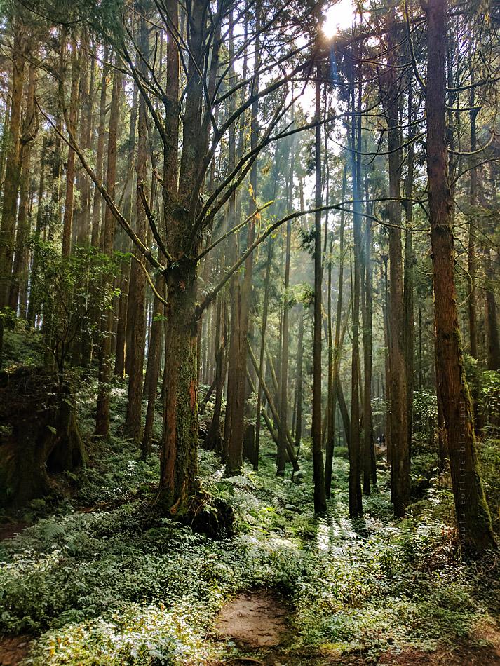 阿里山森林浴