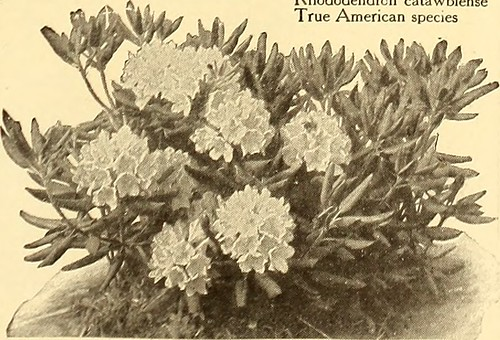 "Image from page 206 of ""American homes and gardens"" (1905) 