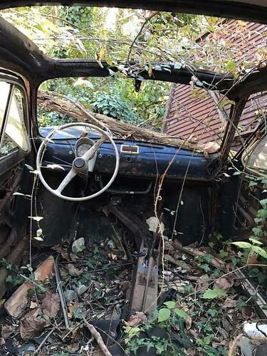 Fiat500 im Wald