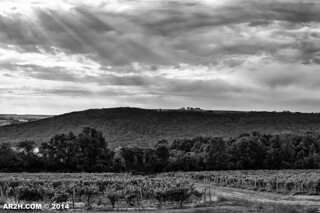 And God Blesses the Winemakers | by Andy Henry Photo