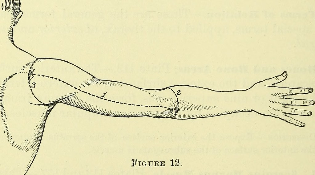Image From Page 623 Of Practical Human Anatomy Electroni Flickr