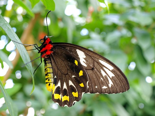 butterfly conservatory at niagara falls on olympus. Black Bedroom Furniture Sets. Home Design Ideas