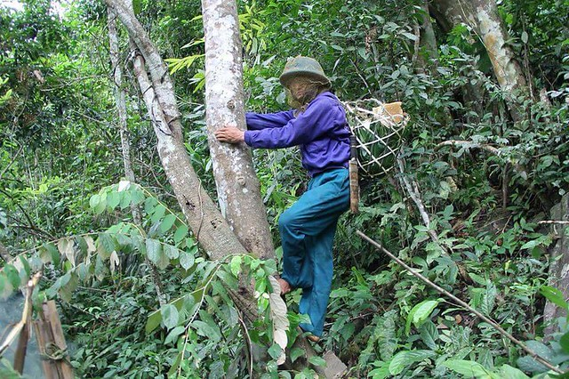 Trang phục của một người lấy mật ong rừng