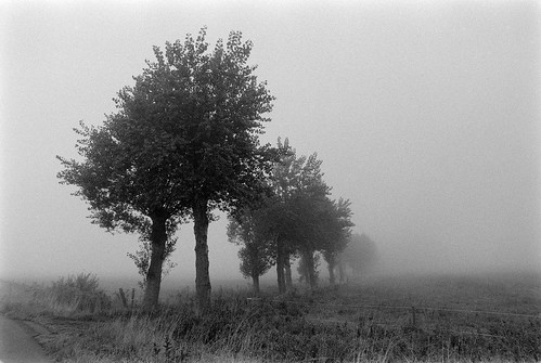 Foggy Willows | by holtelars