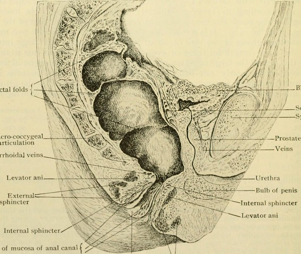 Image From Page 693 Of Human Anatomy Including Structure Flickr