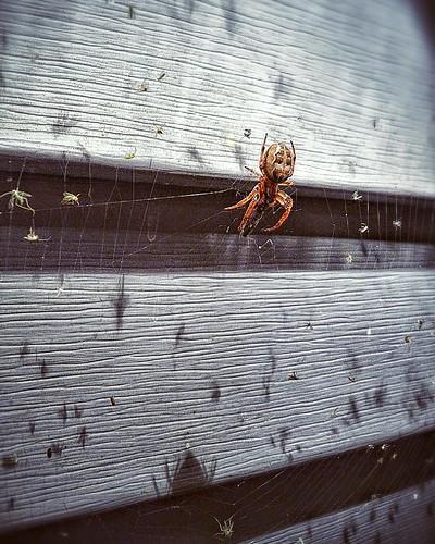 Porchlight New York: Spider Web Under Porch Light; Pawling, New York, USA; (9/2