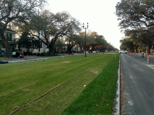 Napoleon neutral ground