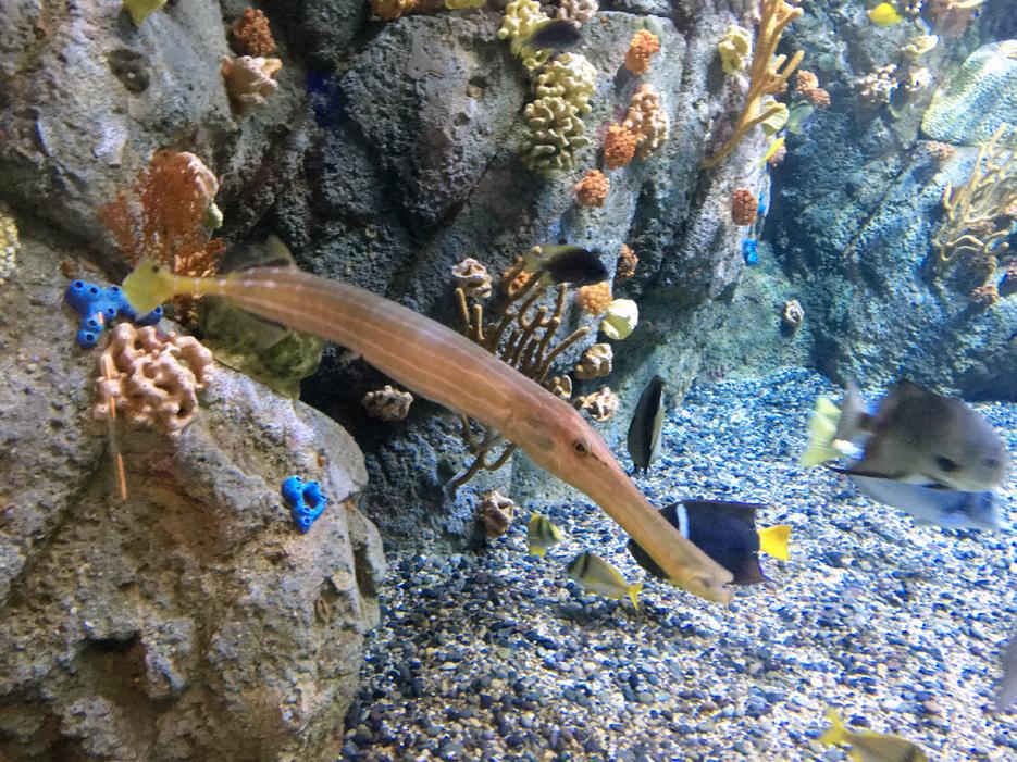 060516_aquarium22a