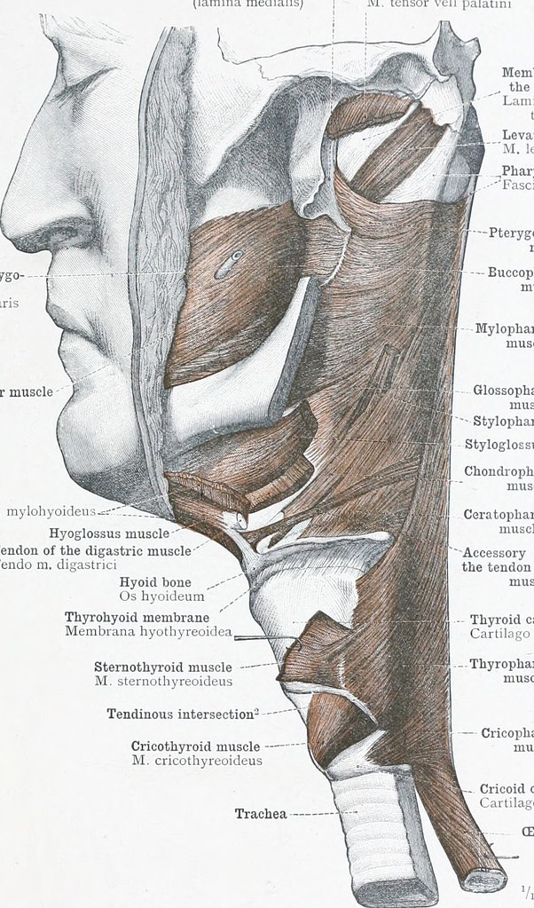 Image From Page 38 Of An Atlas Of Human Anatomy For Stude Flickr