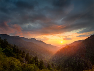 Smoky Mountain Gold | by alnicol2000