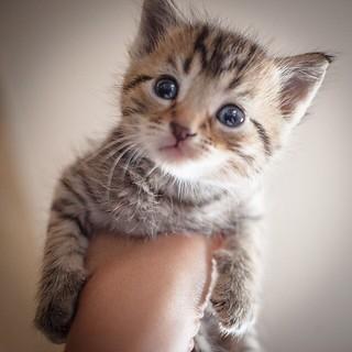 Kitten Won T Eat Wet Food Anymore