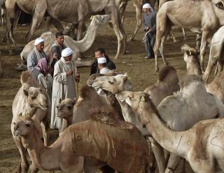 CamelMarket1-07