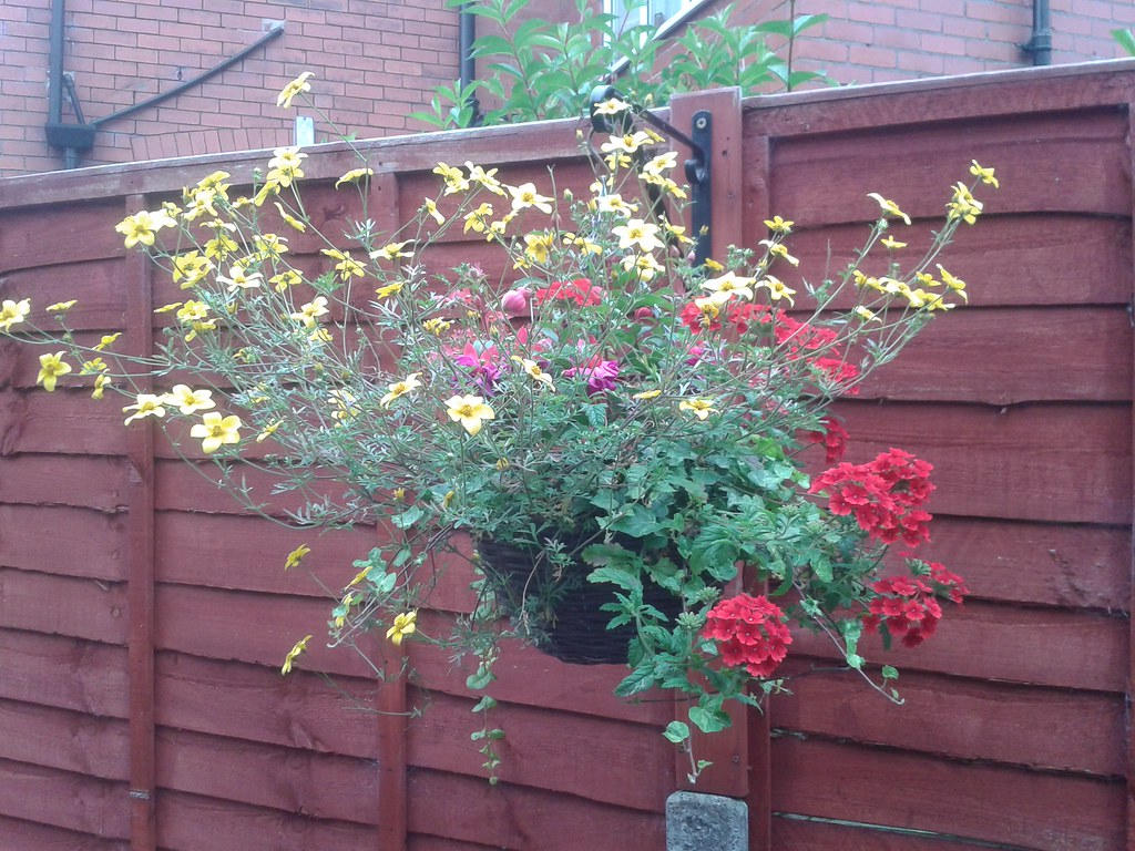 Hanging Basket But What Are The Yellow Flowers 20140626