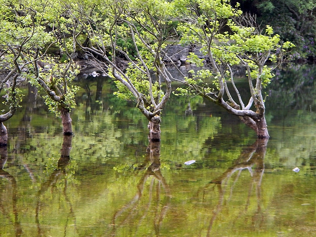 Reflections of happy drowned trees in the reservoir on the Precipice Walk in Dongellau, Wales