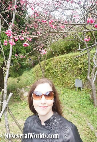 2017 Yangmingshan Flower Festival-03245