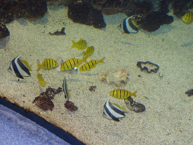 2014.07.17.: Nyíregyházi állatpark