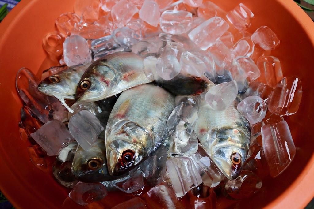 5 Seafood