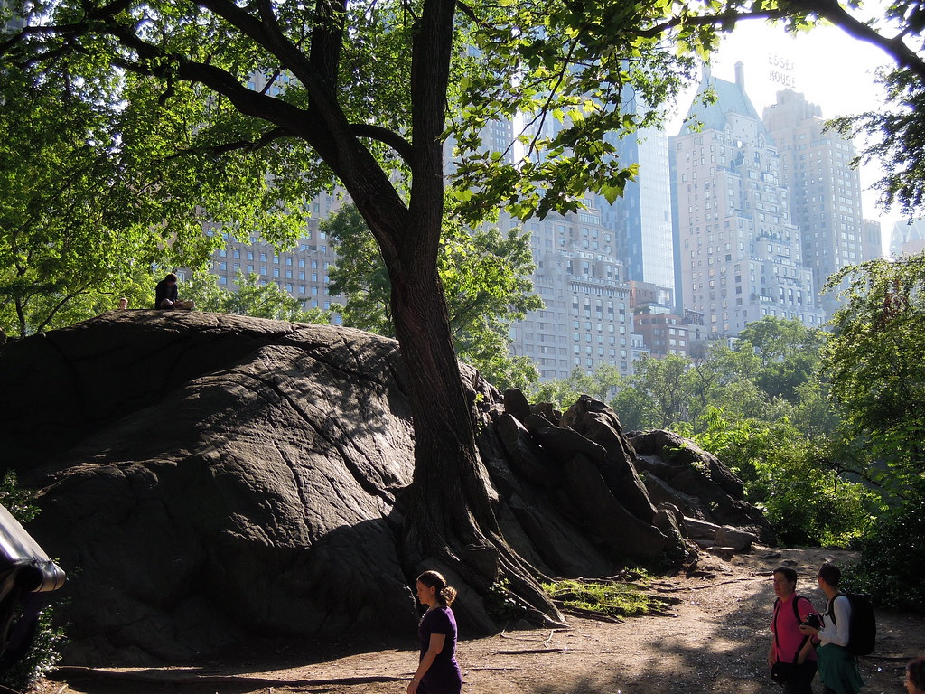 Like a jurassic jungle blended with a modern city a corner of central park reveals