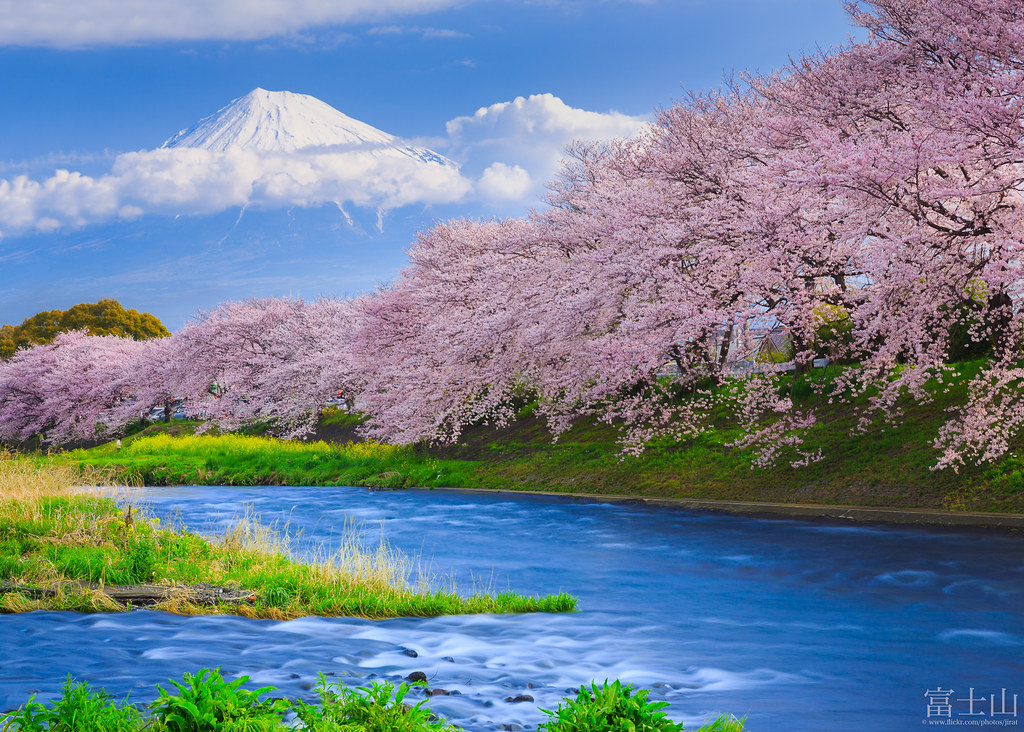 Fuji and Sakura at the river