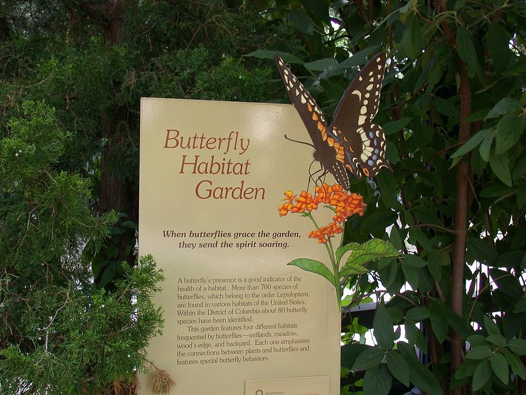 Superb ... Butterfly Habitat Garden   By DC Tropics